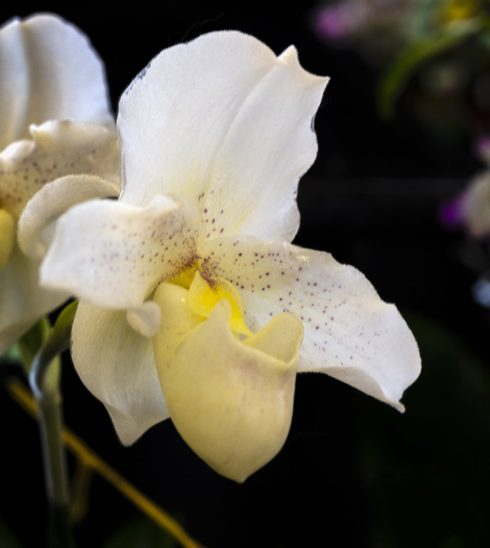 Orchids-38.jpg