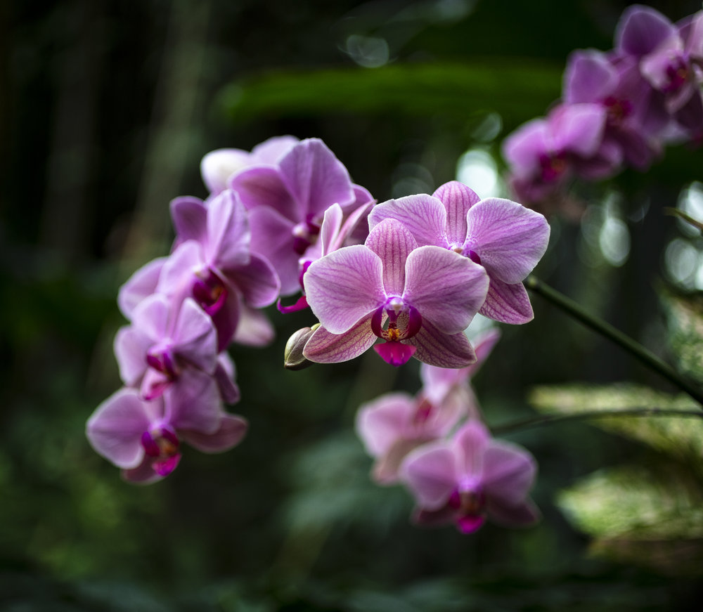 Orchids-41.jpg