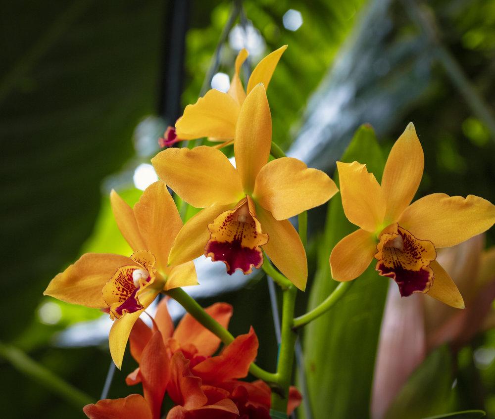 Orchids-48.jpg