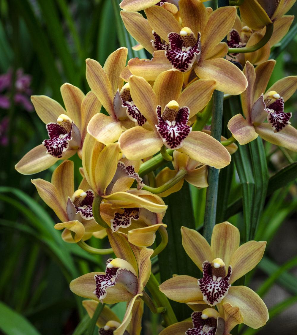 Orchids-51.jpg