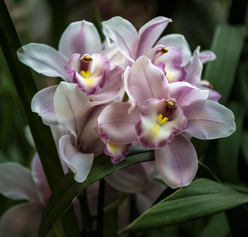 Orchids-53.jpg