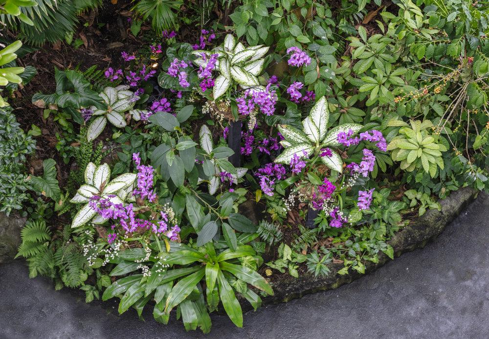 Orchids-56.jpg