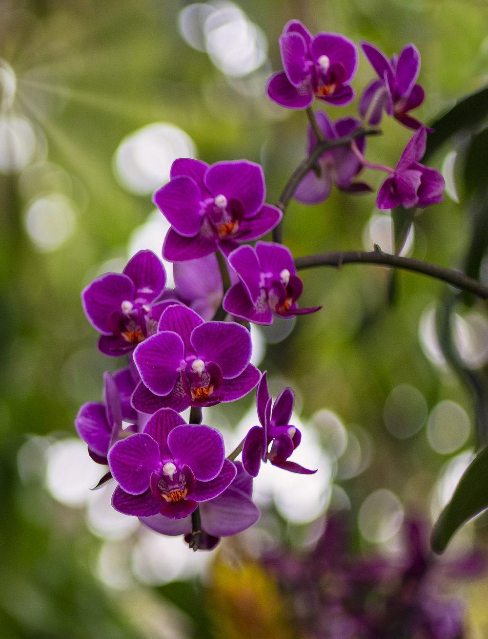 Orchids-57.jpg