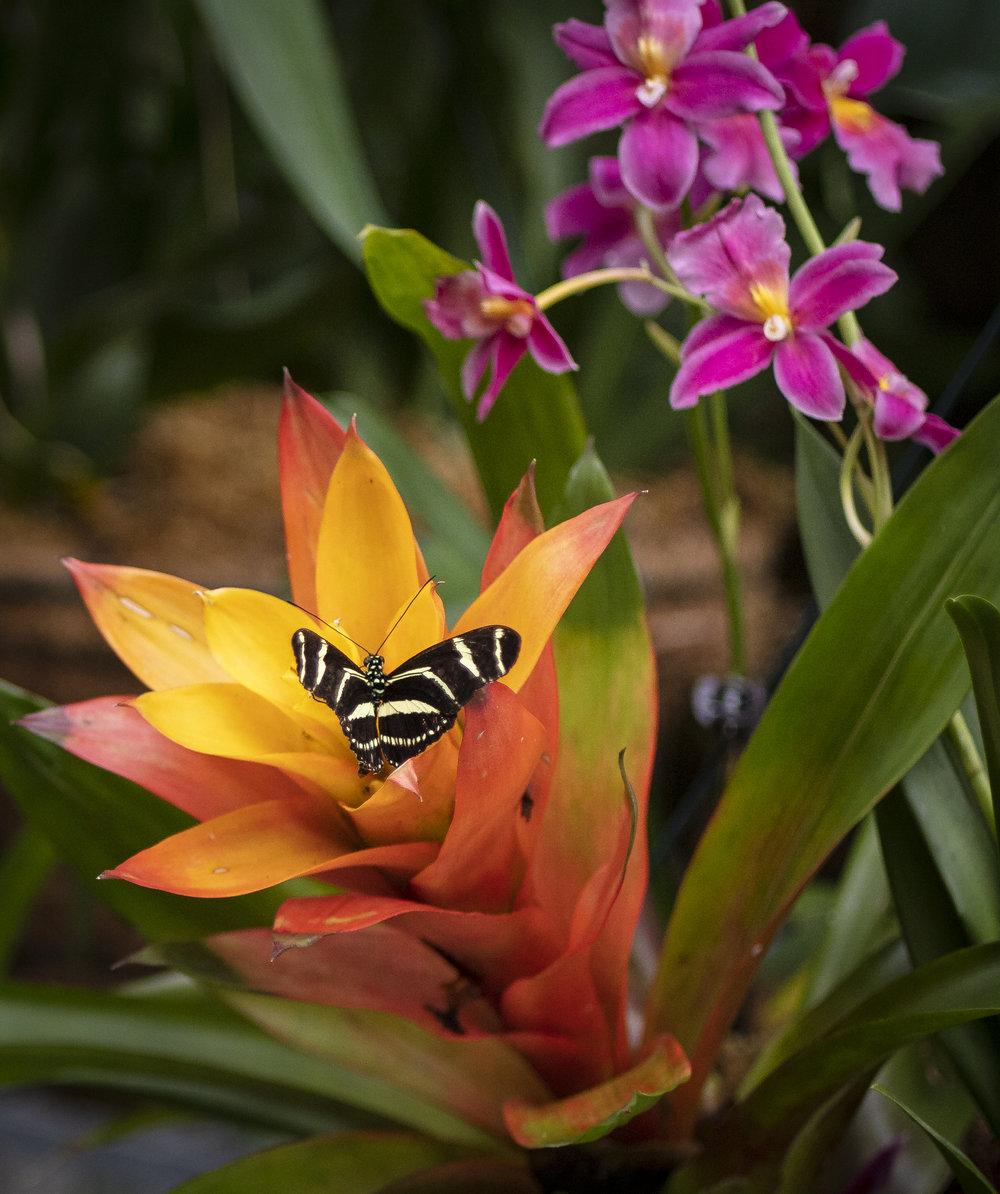 Orchids-58.jpg
