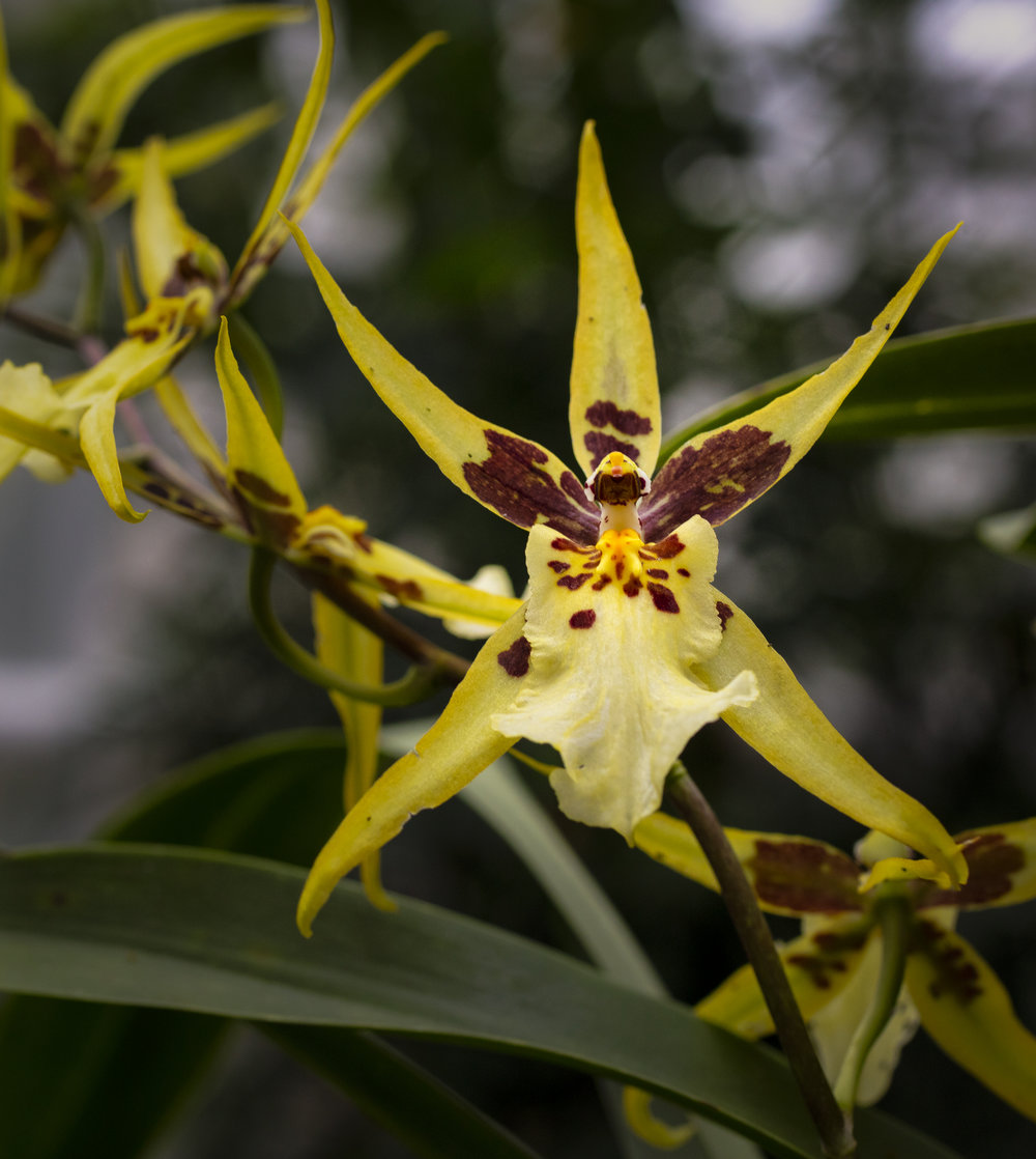 Orchids-59.jpg