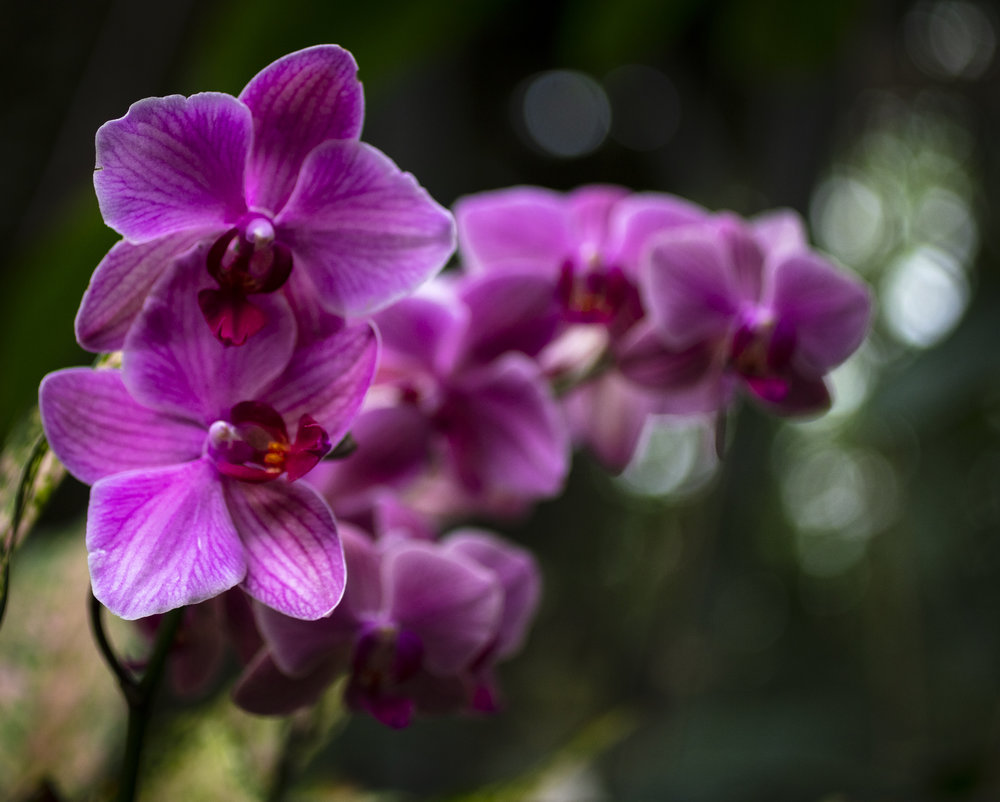 Orchids-61.jpg