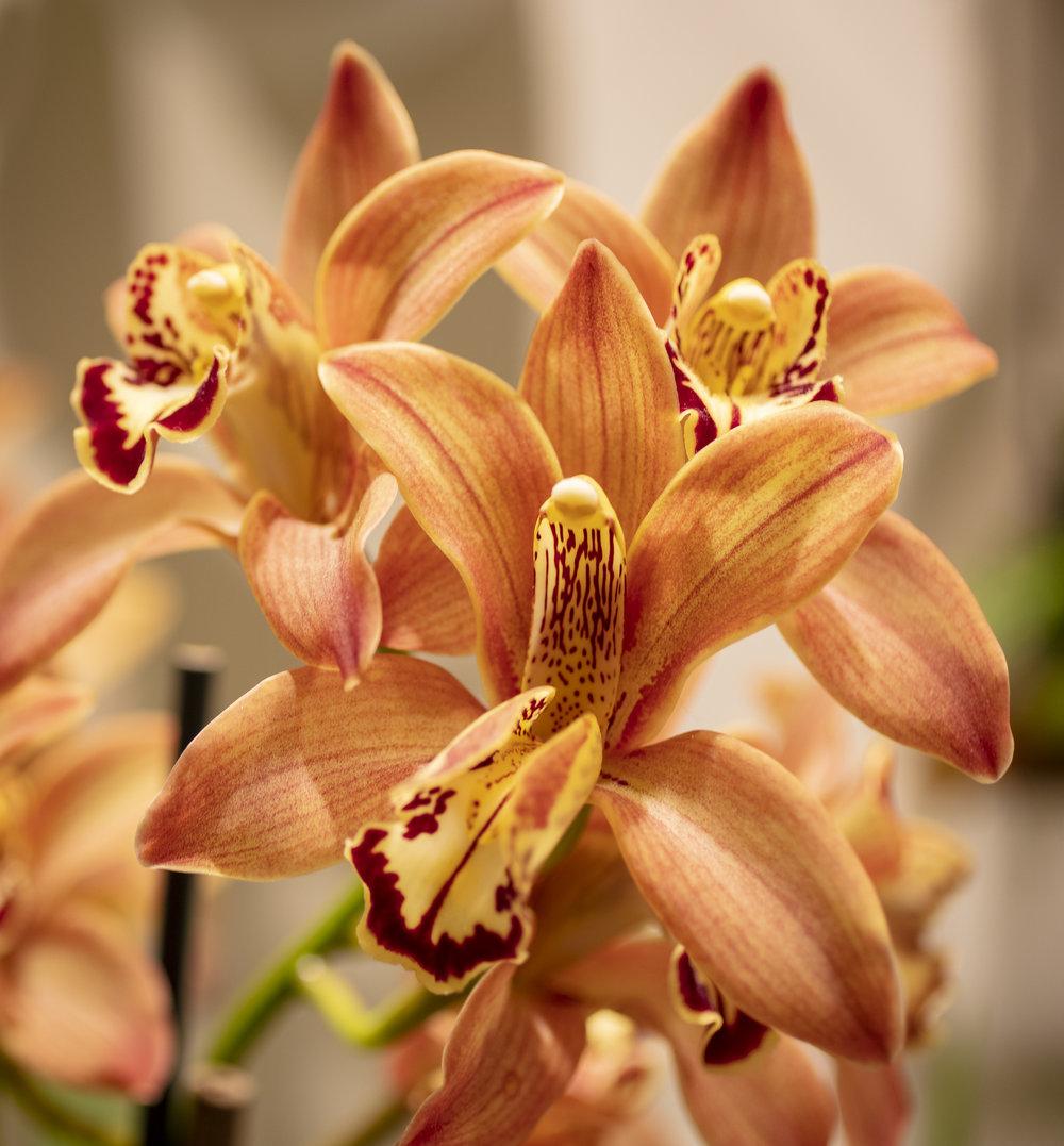 Orchids-5.jpg