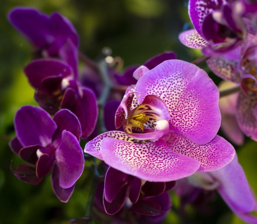 Orchids2-1.jpg
