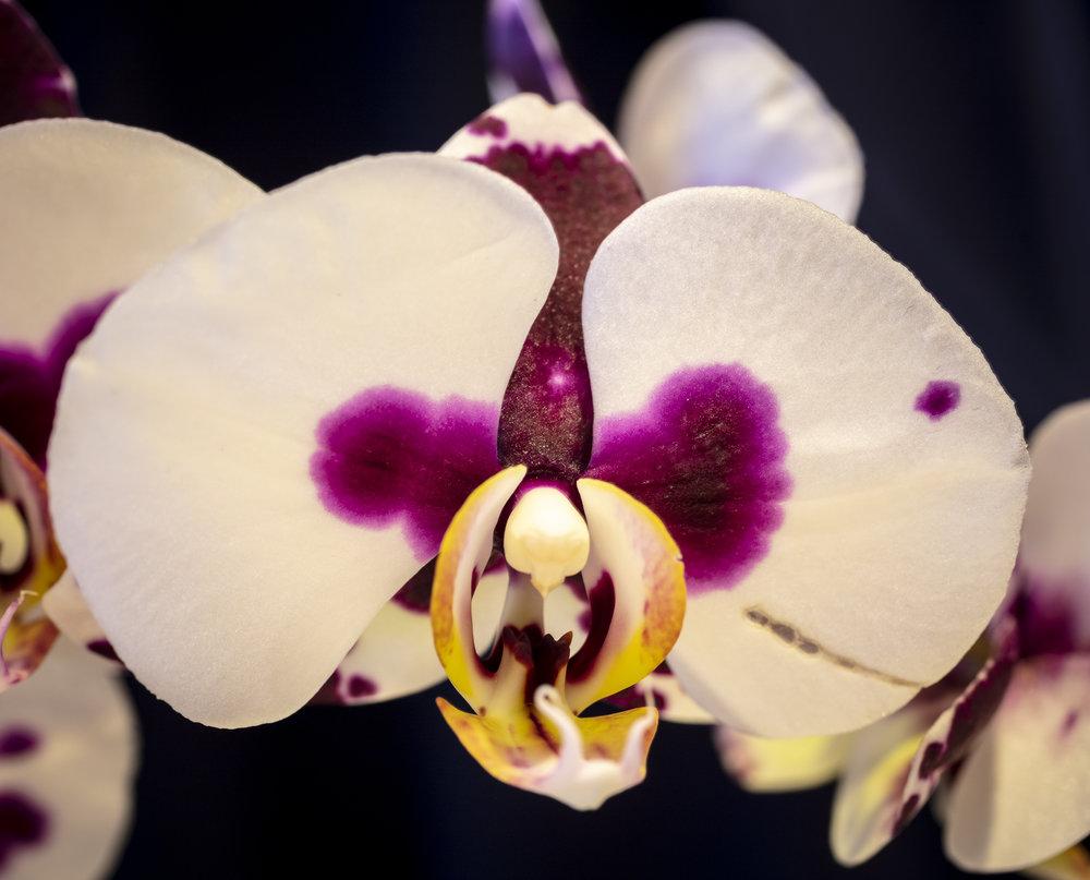 Orchids2-6.jpg
