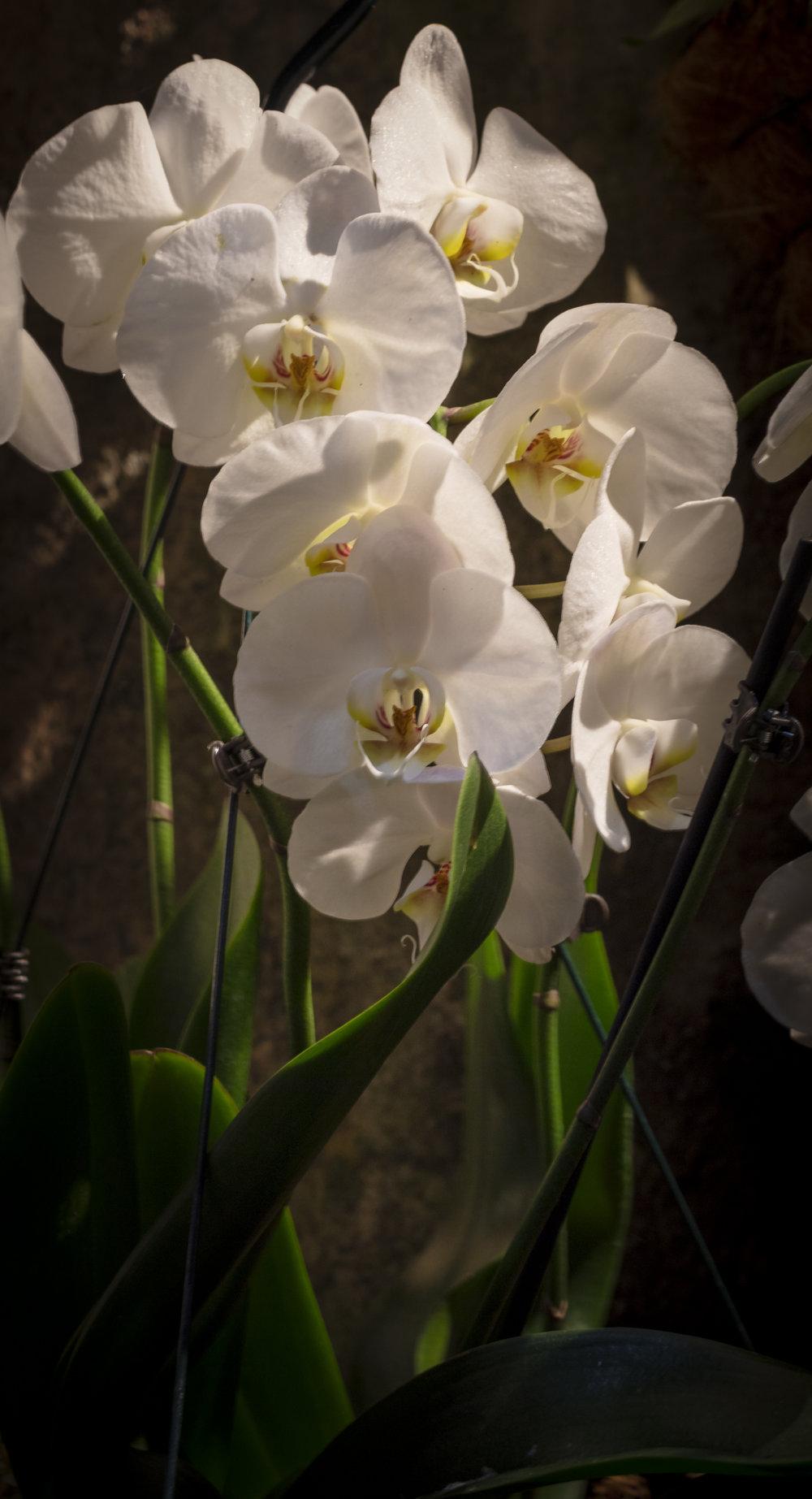 Orchids2-9.jpg