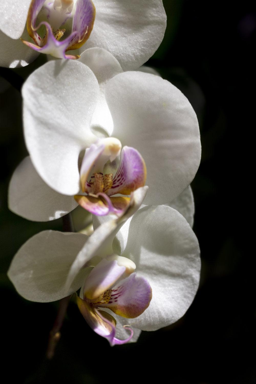 Orchids2-12.jpg