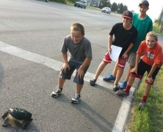 turtle find.med.jpg