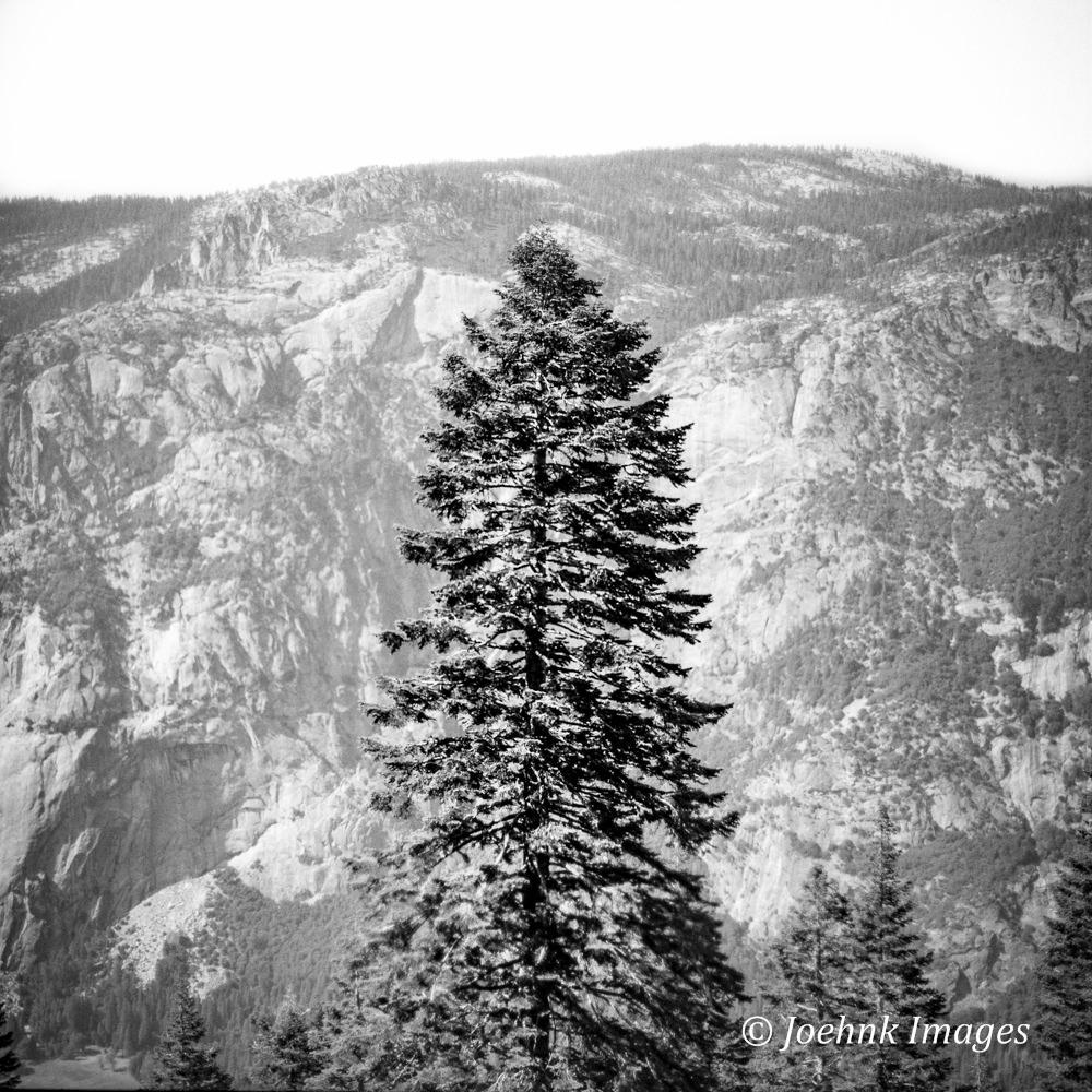 Yosemite #35