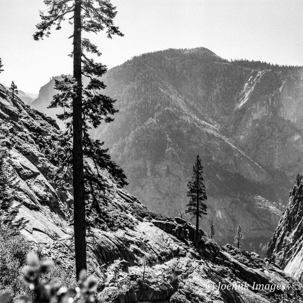 Yosemite #39