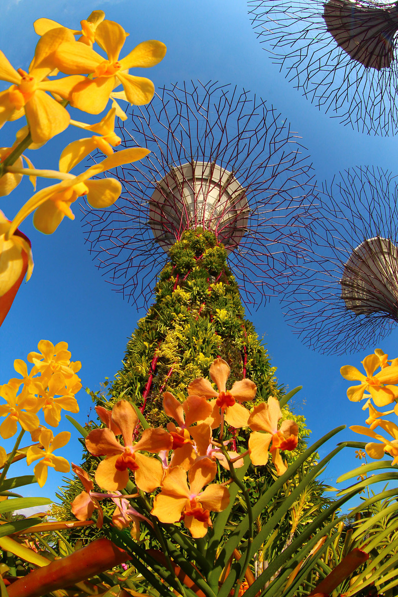 floral beauty at Gardens by the Bay Singapore solar powered trees.jpg