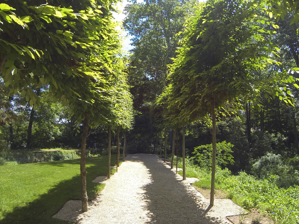 This beautiful allee of carpinus trees guides the casual stroller along a pea gravel path to a wrought iron gate that leads you down steps to the banks of the Delaware River.