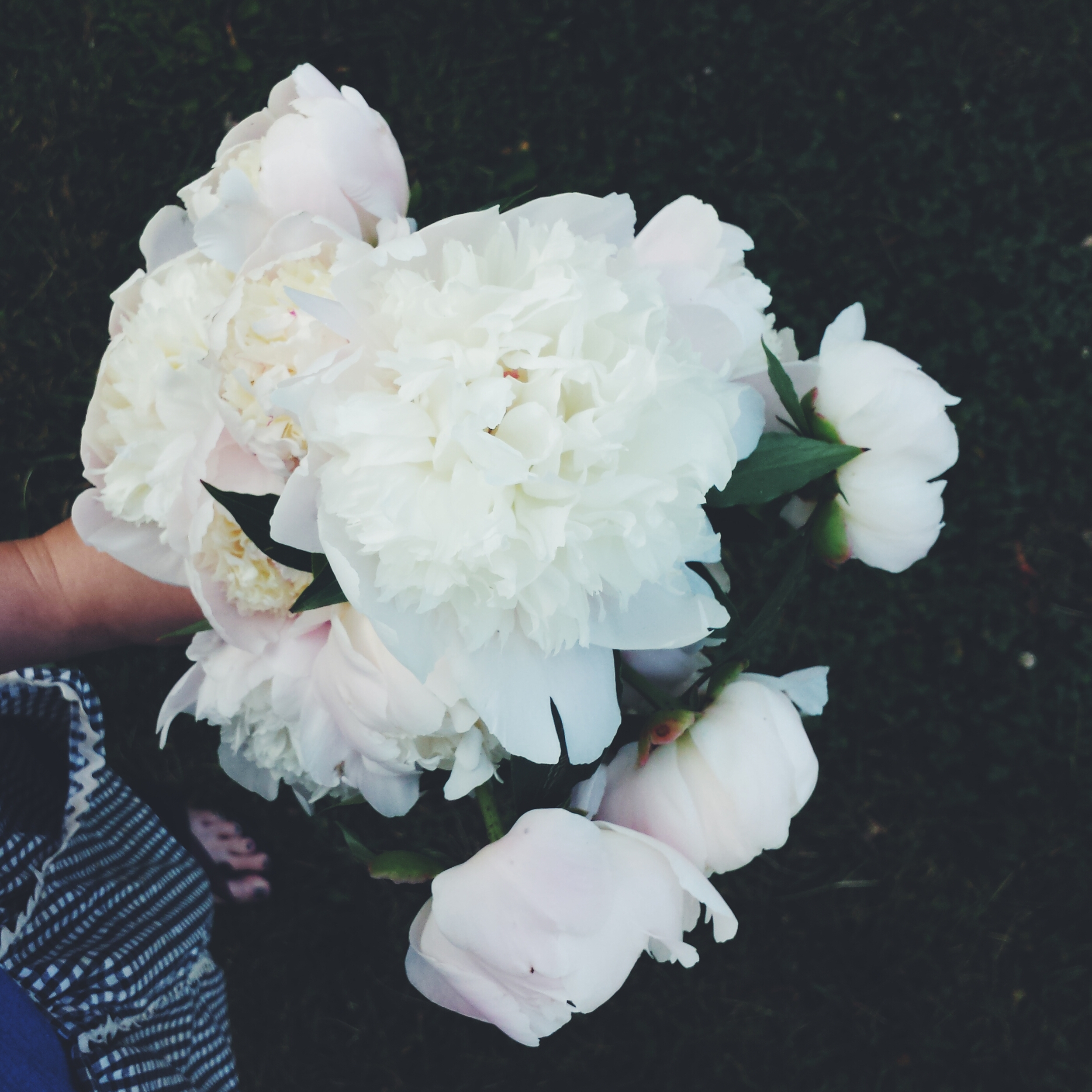 peony season is the best
