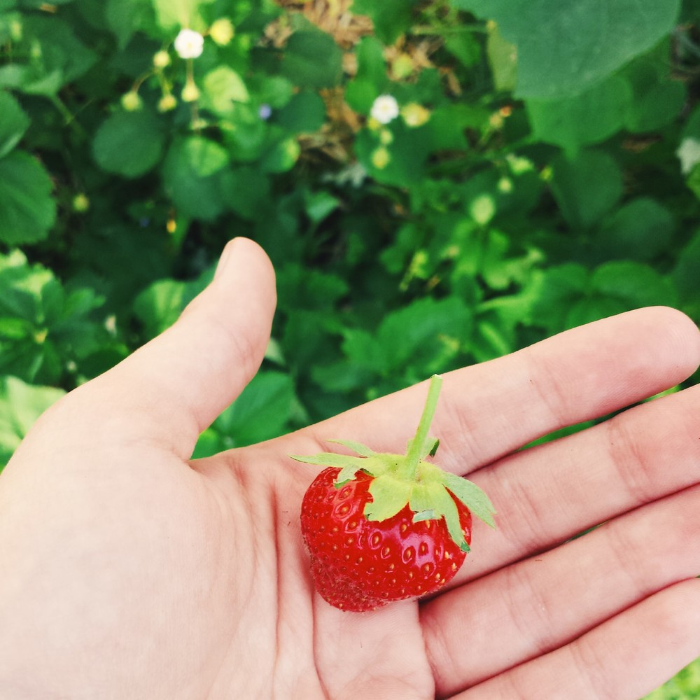 first backyard strawberry of 2014!