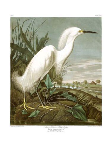 snowy_heron_or_white_egret.jpg