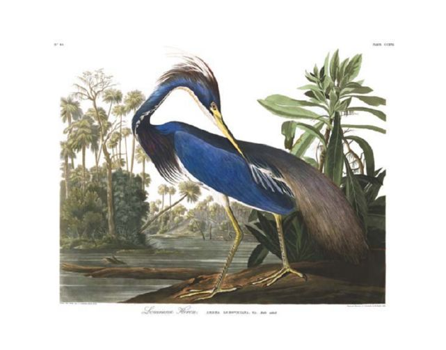 louisiana_heron.jpg