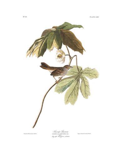 swamp_sparrow.jpg