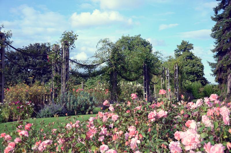 rosegardenfar.jpg