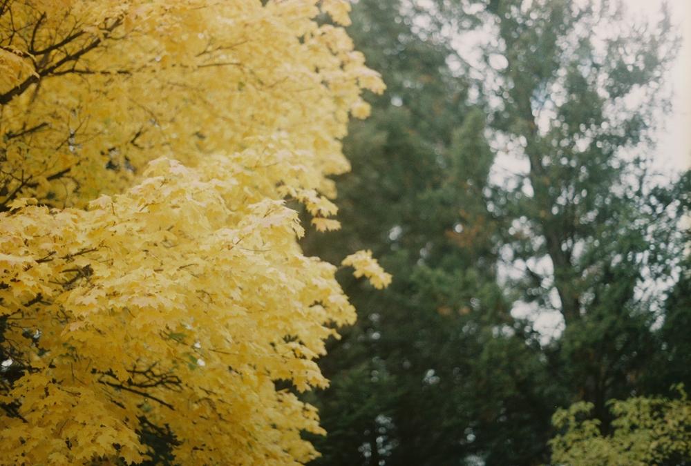 Shorey - fall.jpg