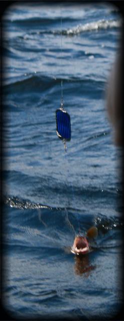 lake trout sebago July.jpg