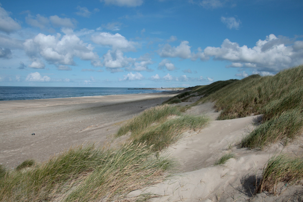 dk_jutland_dunes_1.jpg