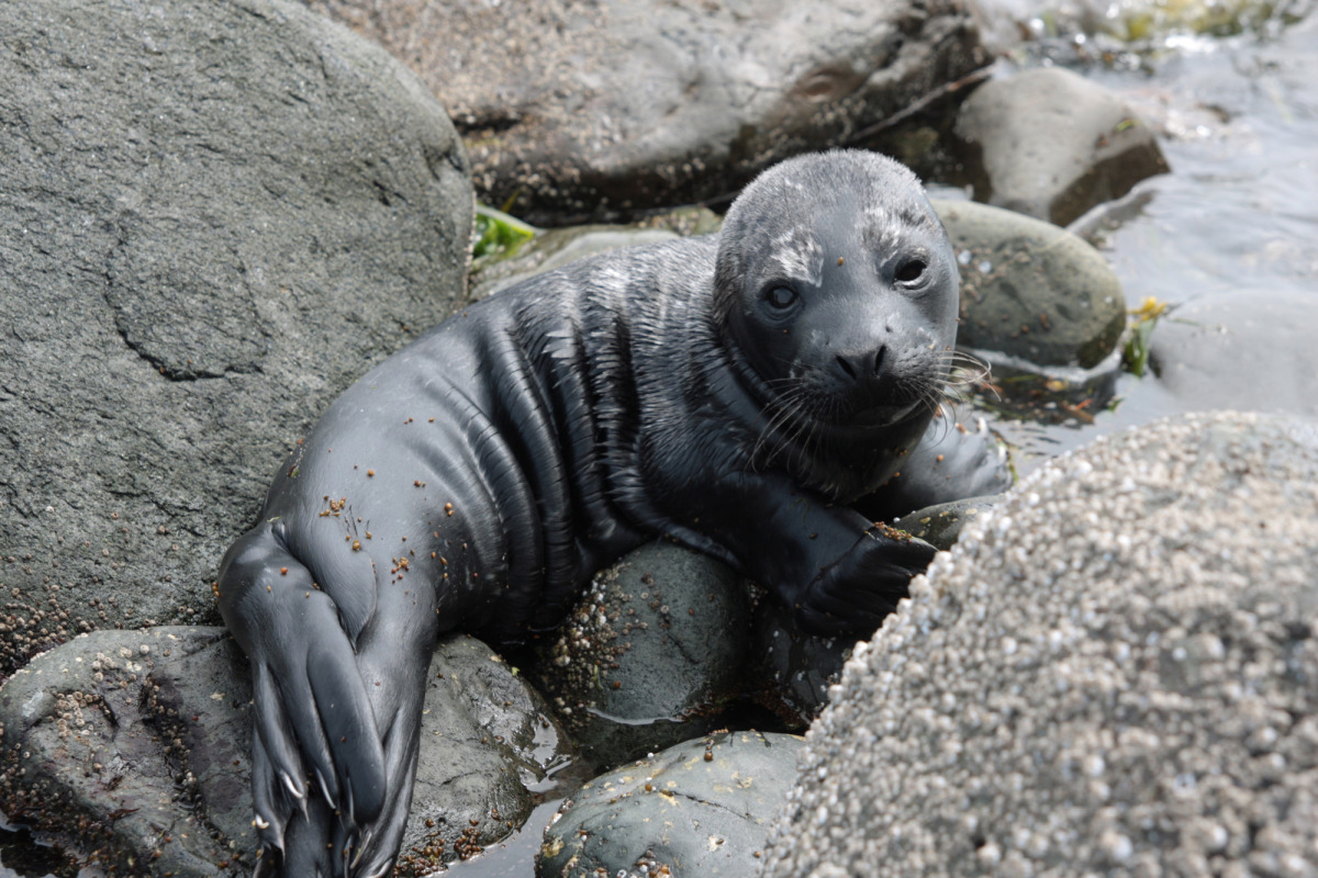 seal bay_01.jpg