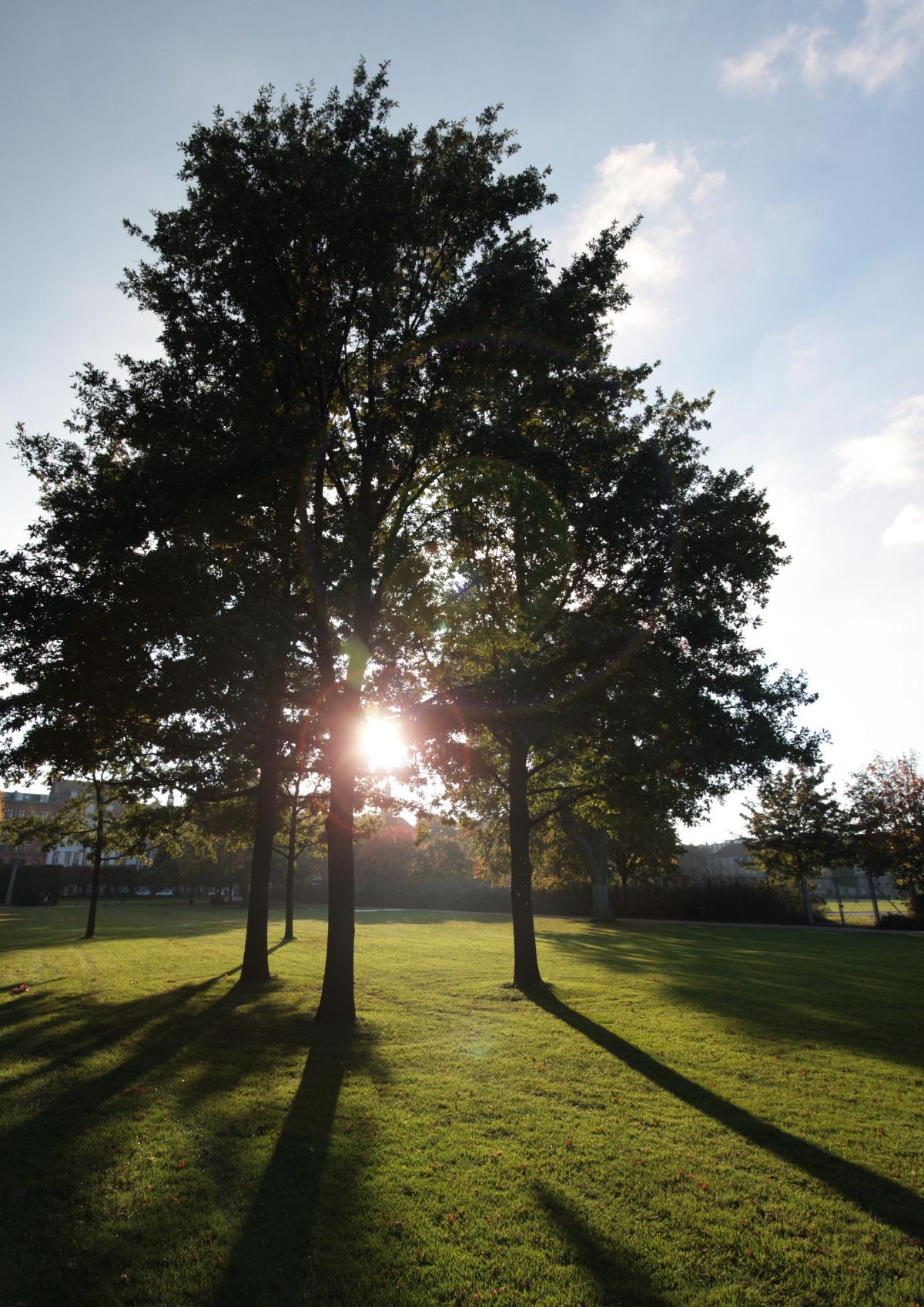 cph_kongens have_tree flare.jpg