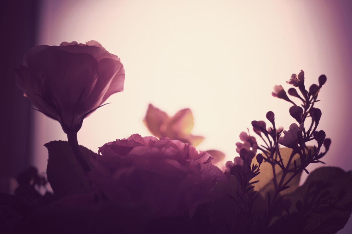 roses_purple.jpg