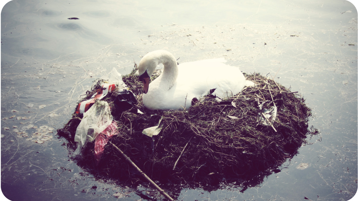 cph_swan in garbage.jpg
