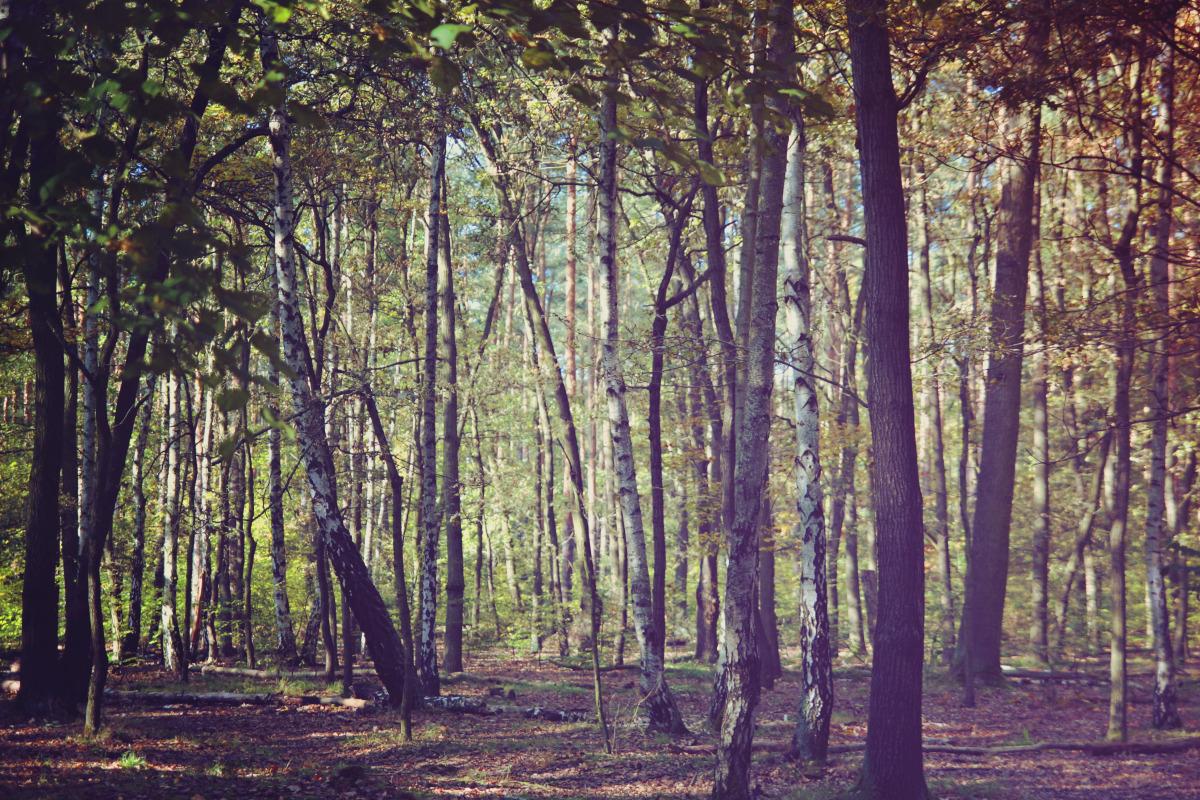 autumn_06.jpg