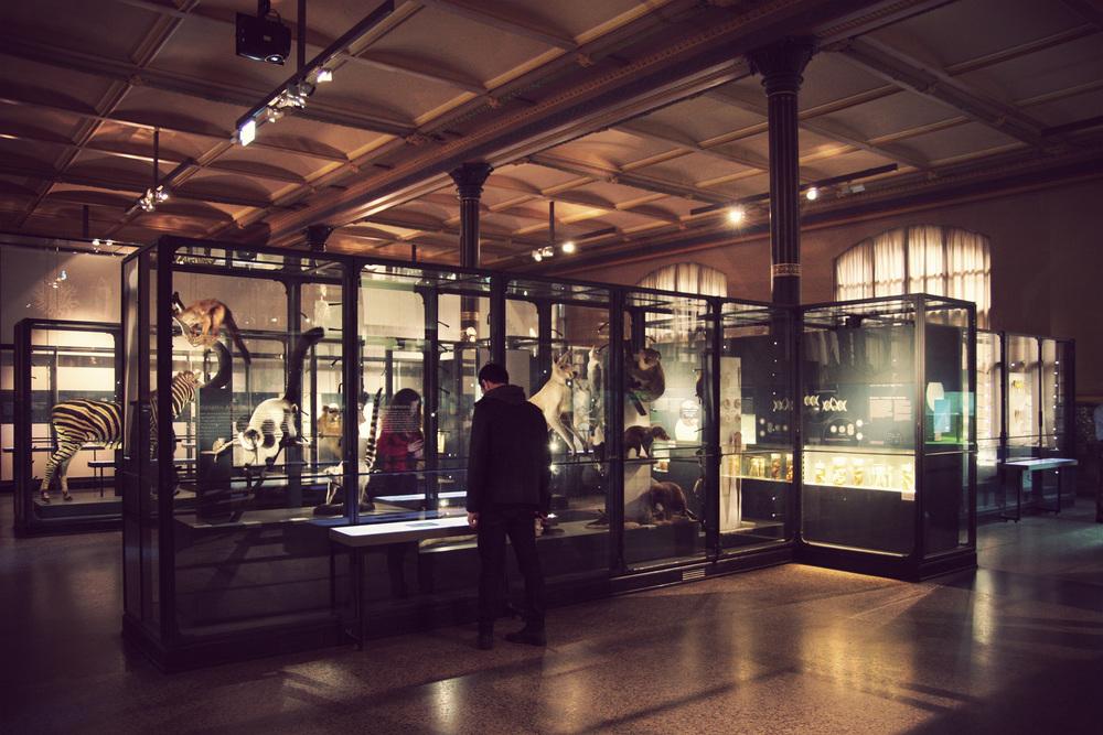 Naturkundemuseum_02.jpg