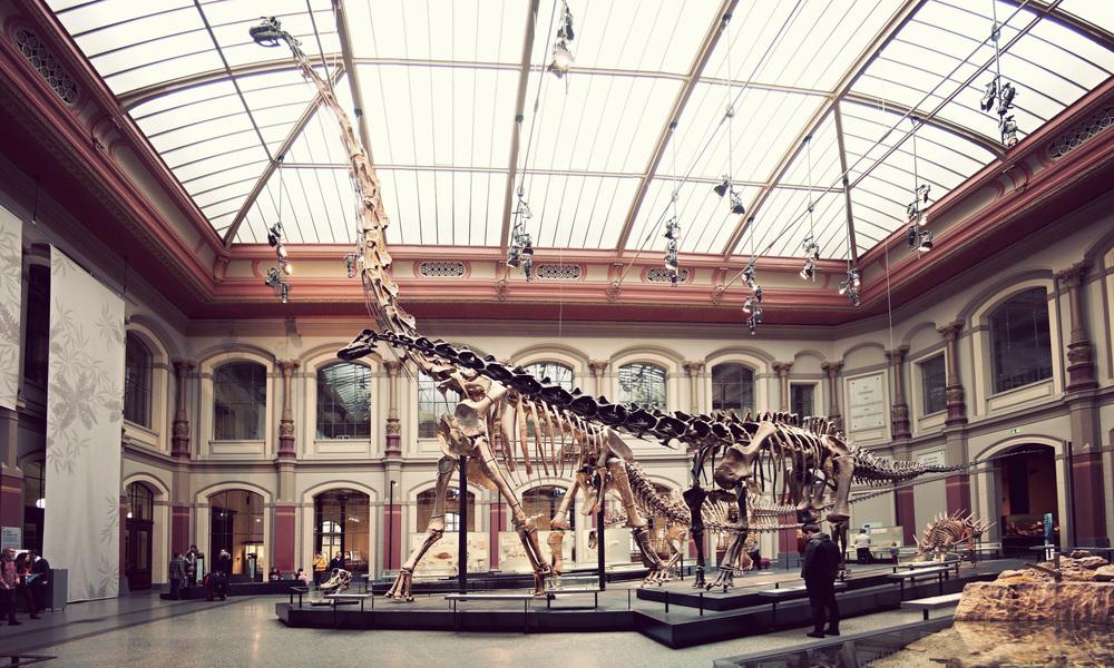 Naturkundemuseum_Main-Room.jpg