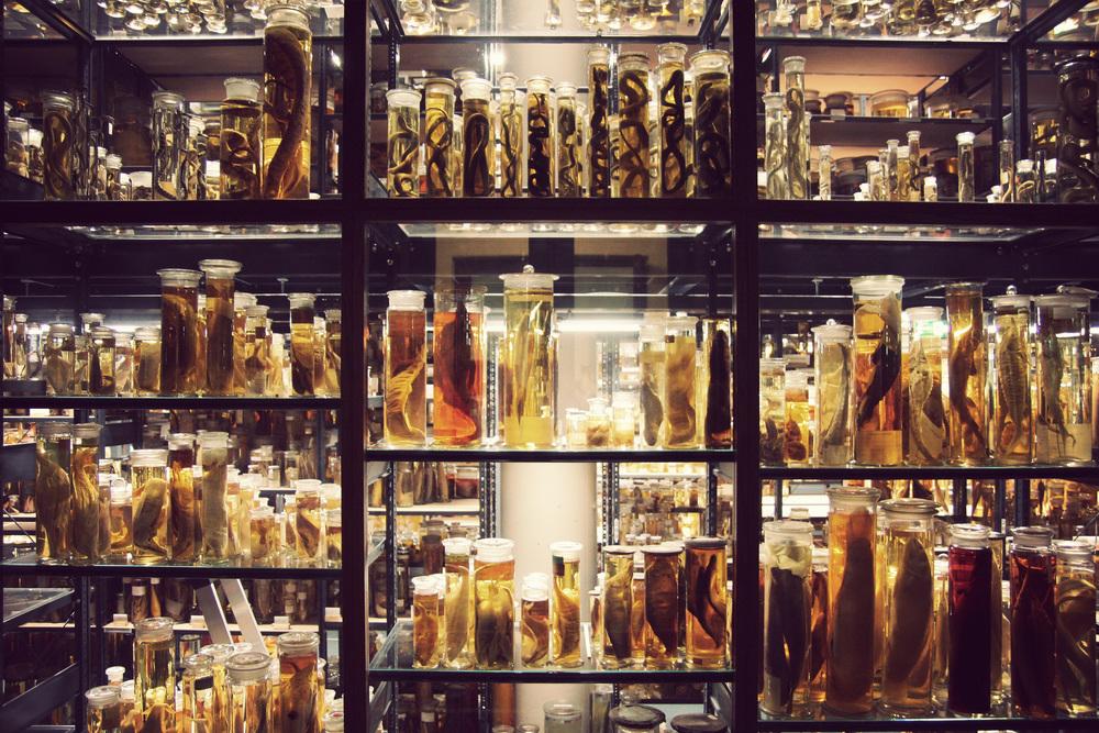 Naturkundemuseum-Cold-Room.jpg