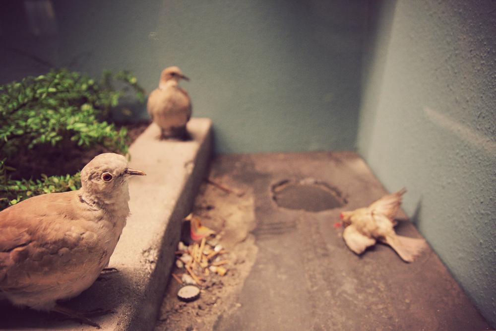 Urban-Birdicide.jpg