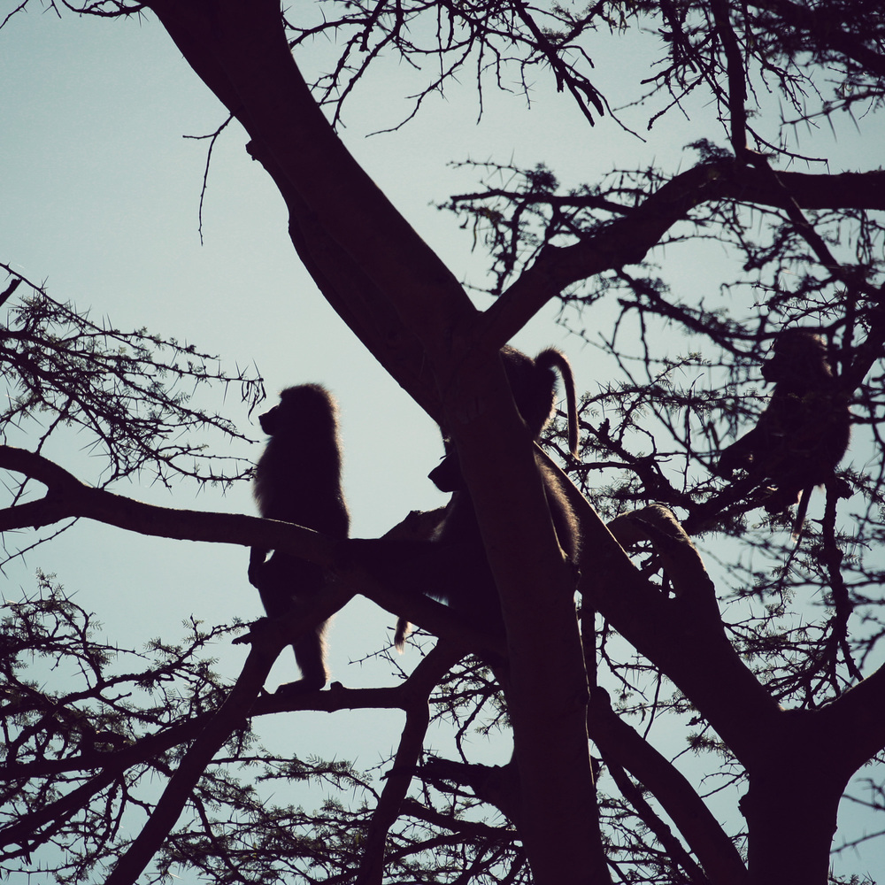 Day02_Sweetwater_Baboon-Tree_04.jpg