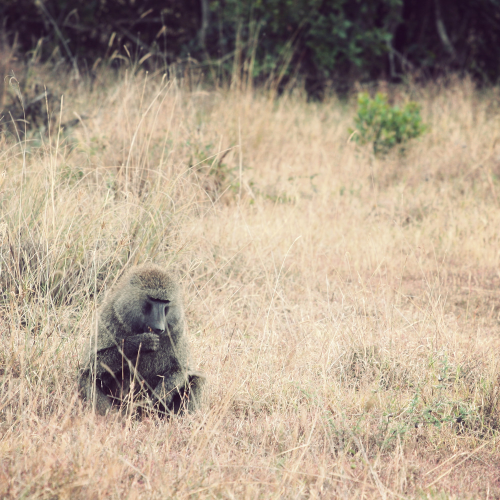 Day02_Sweetwater_Baboons_02.jpg