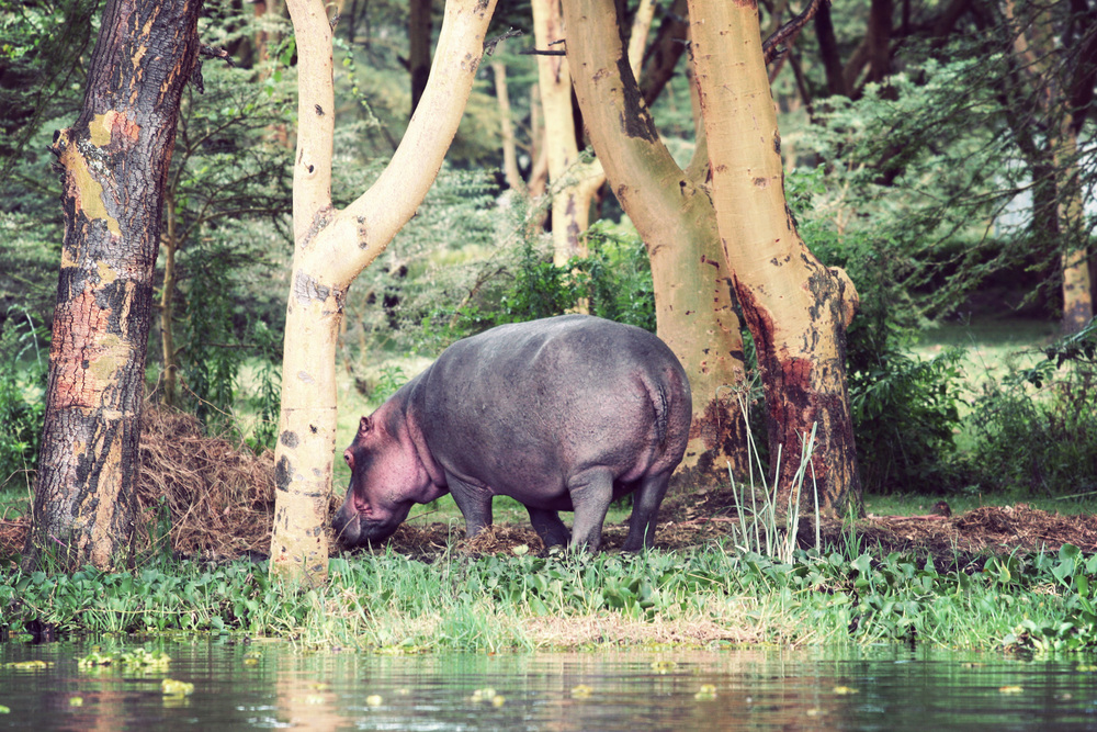 Day03_SOPA_Boat-Safari_Hippos_03.jpg