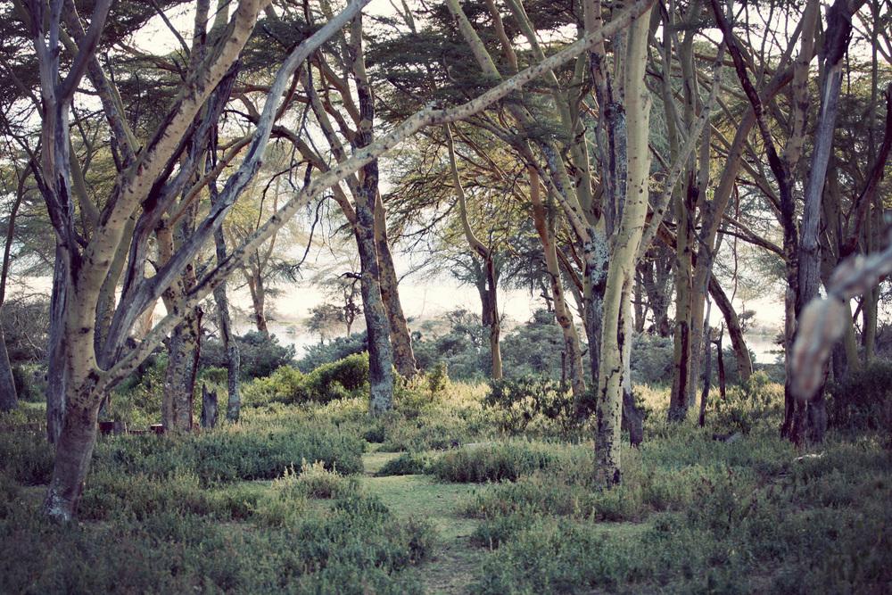 Day03_SOPA_Walking-Safari_Forest.jpg