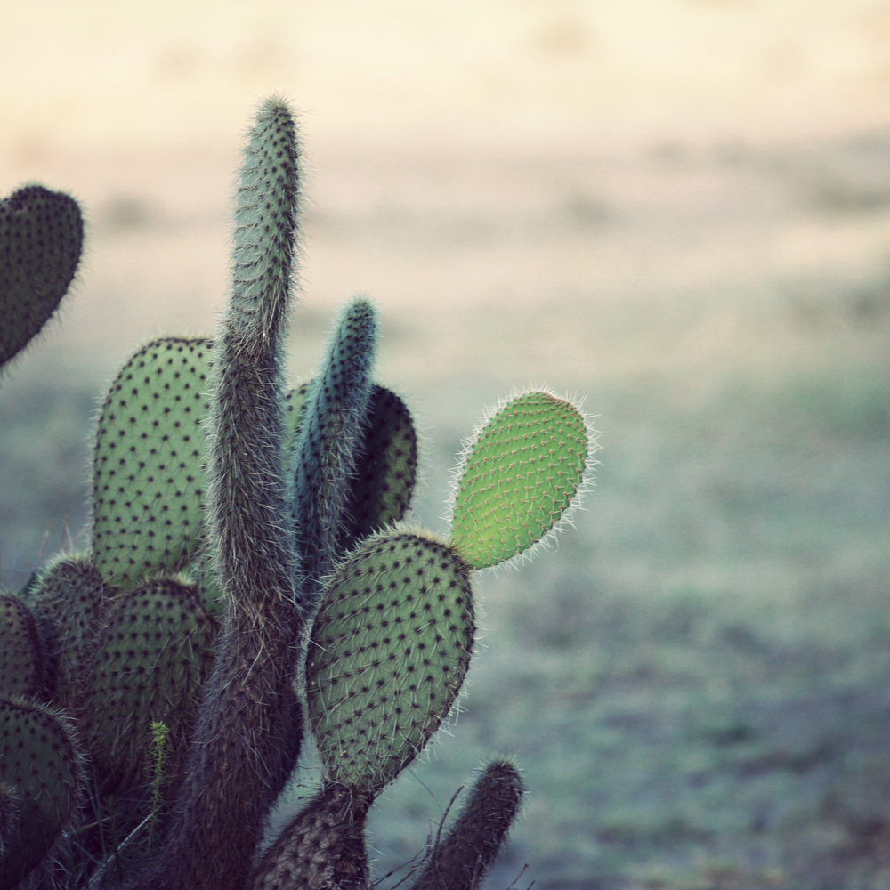 Day03_SOPA_Walking-Safari_Cactus.jpg