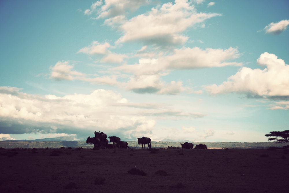 Day03_SOPA_Walking-Safari_Wildebeest_01.jpg