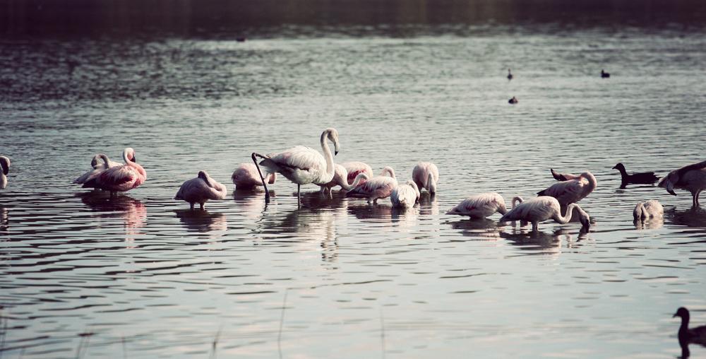 Day05_Flamingos_04.jpg