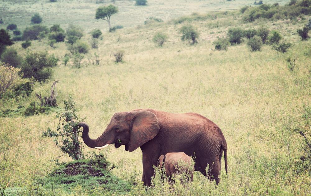 Day10_Elephants_02.jpg