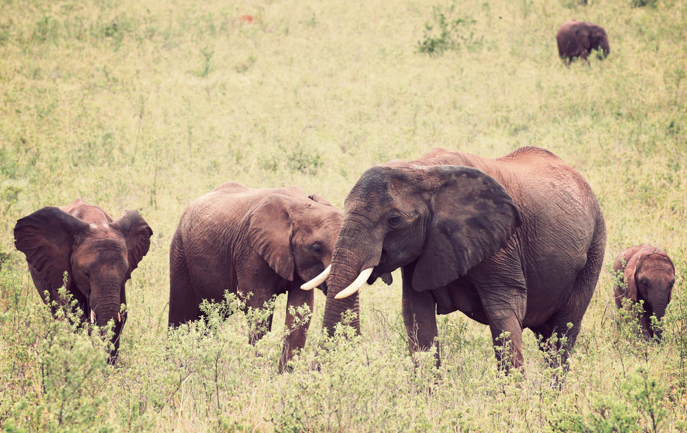 Day10_Elephants_03.jpg
