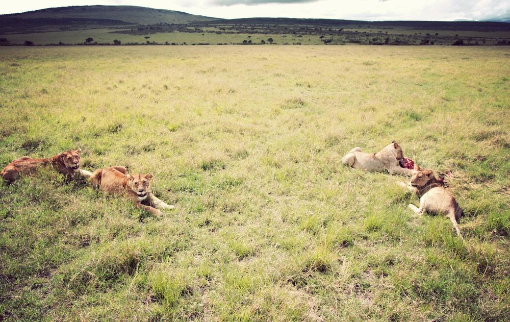 Day10_Lions-at-Kill_03.jpg