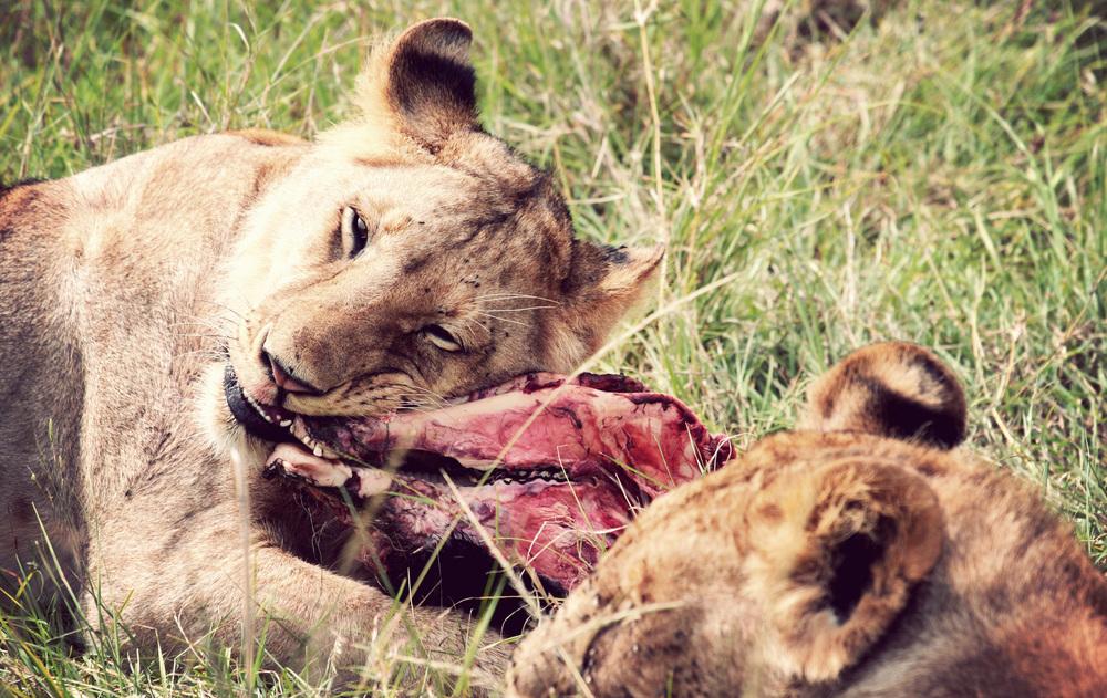 Day10_Lions-at-Kill_02.jpg
