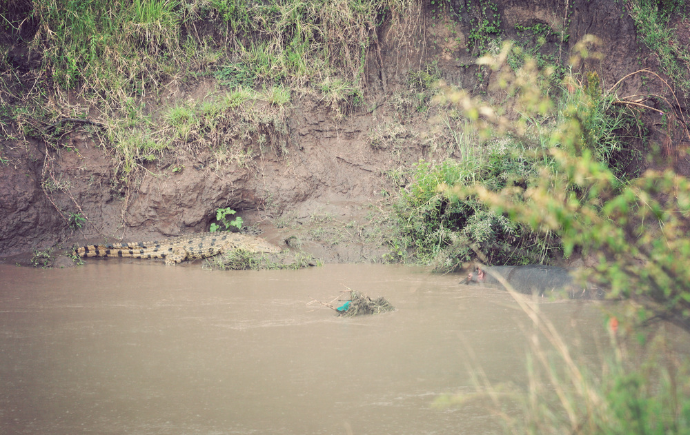 My only crocodile shot, with a bonus hippo!